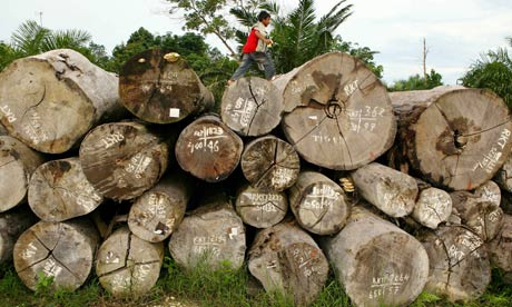 Timber investment